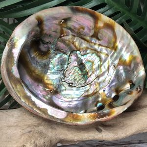 XL Abalone Double Sided Polished Shell Bowl Tray